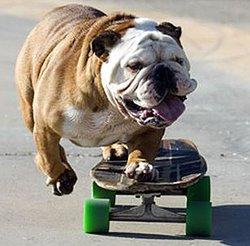Who Created Skateboarding Skateboard History